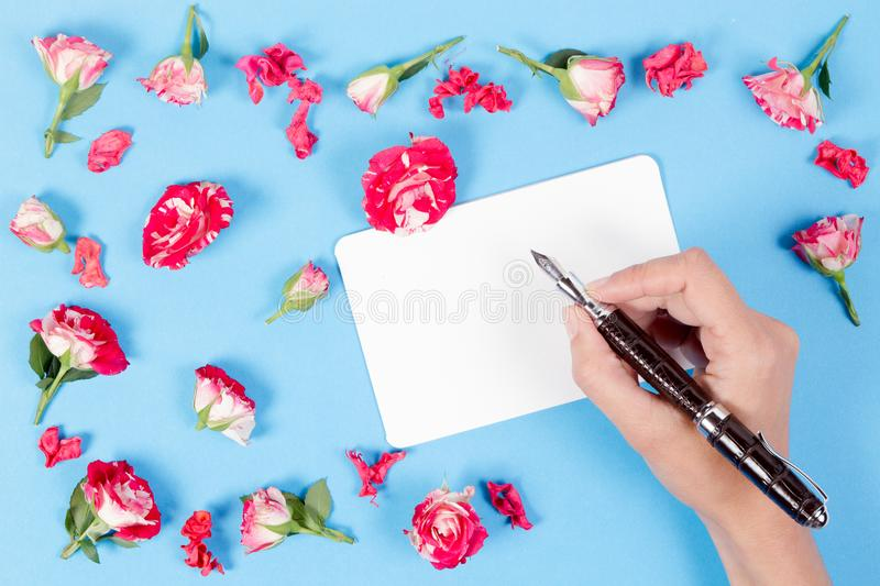 Woman hand writing on blank card.Fresh roses on blue background royalty free stock photography