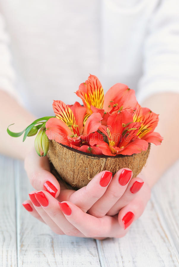 Woman hands with beautiful red manicure on fingernails stock image