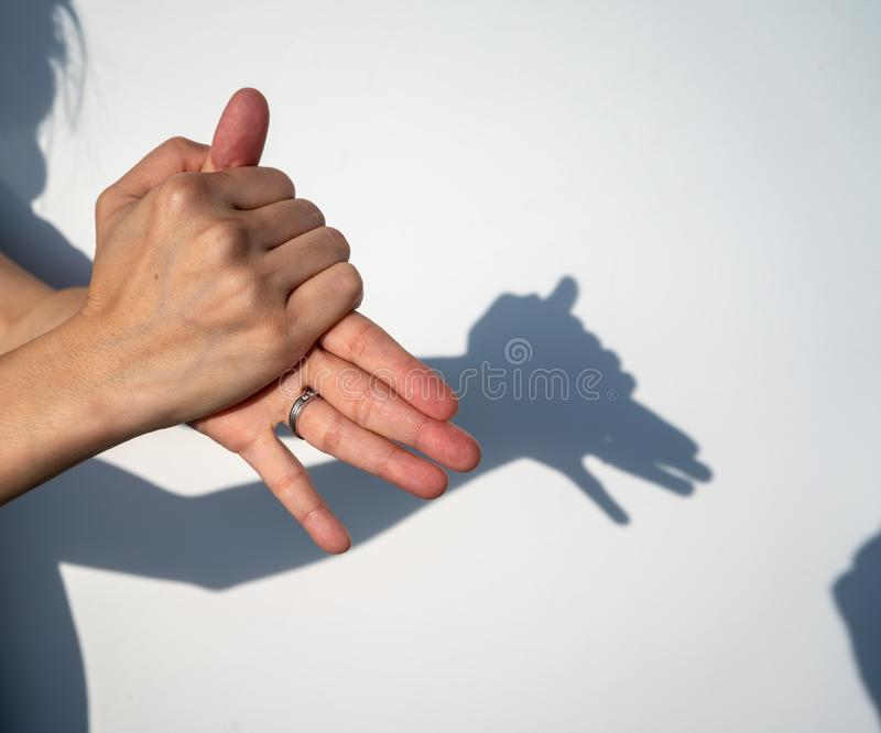 Woman hands creating silhouette shadow of animal on white wall b stock image