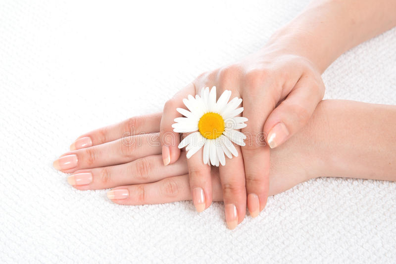 Woman hands french manicure with camomile flower on fresh towel. Beautiful woman hands french manicure with camomile flower on fresh towel isolated on a white stock photo
