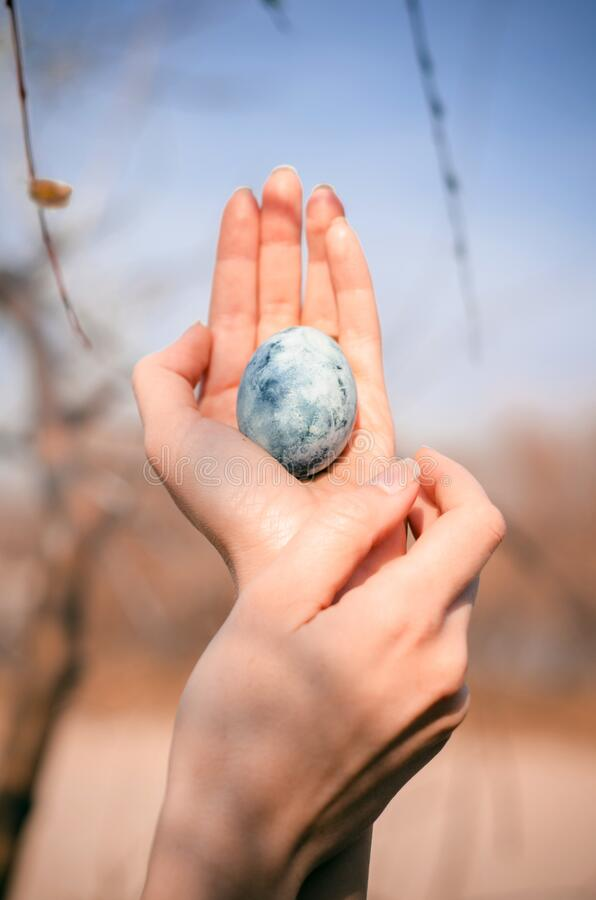 Woman hands hold blue egg, like dragon egg, blue sky and branches, like mother of dragons, photo for cover of book. Woman hands hold blue egg, like dragon egg royalty free stock images