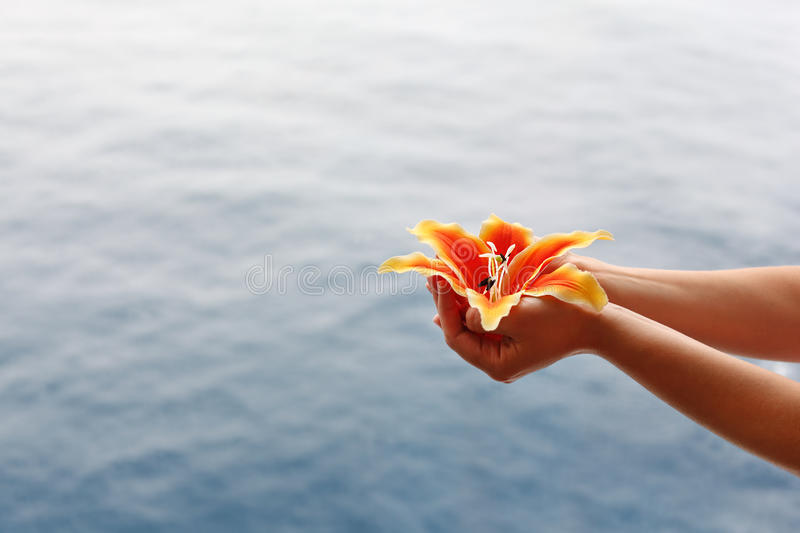 Download Woman Hands Hold Lily At Background Of Water Stock Photo - Image: 26337398