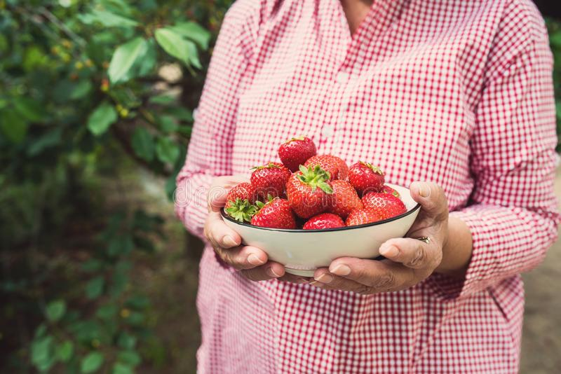 Woman hands holding a a bowl of strawberries stock photography
