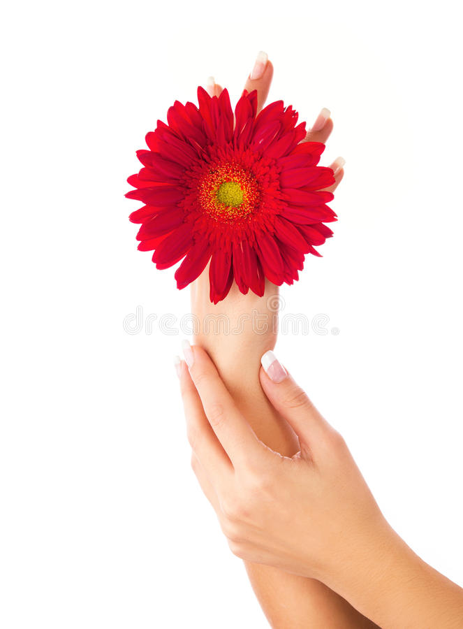 Woman hands holding red flower