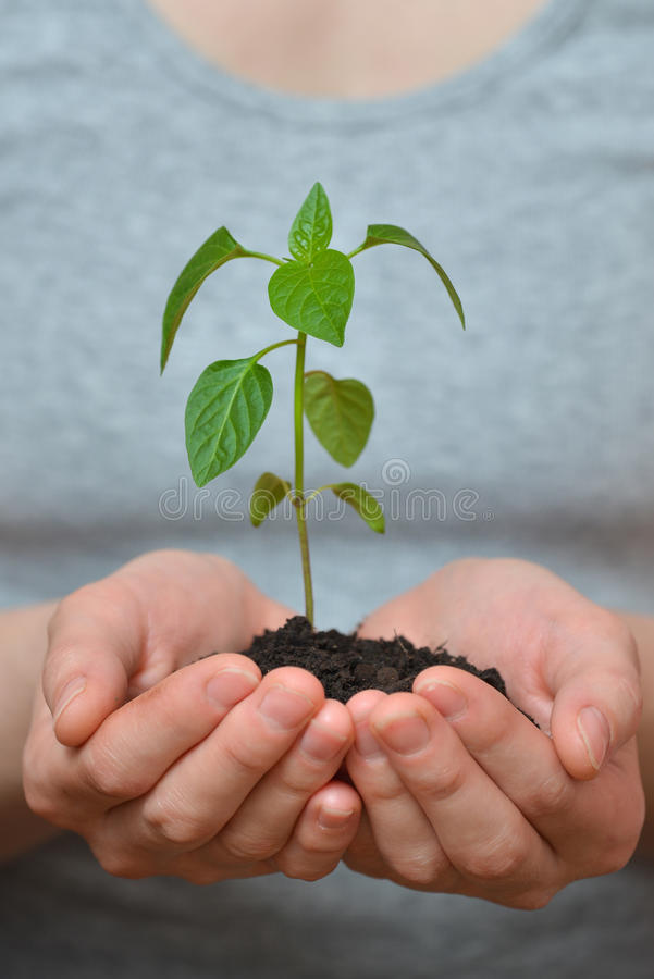 Woman hands holding young plant in fertil soil. Ecology concept royalty free stock images