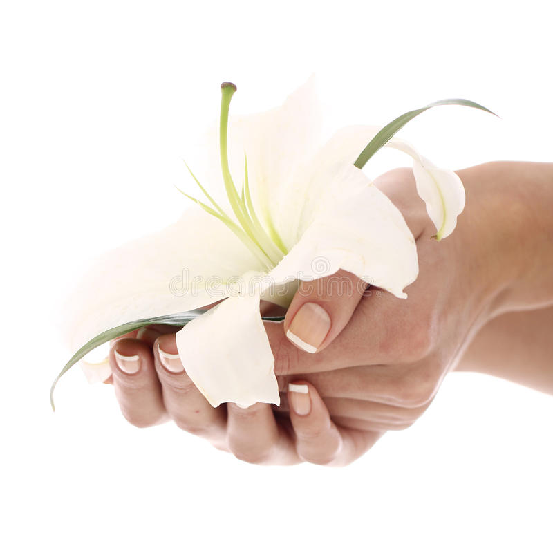 Woman hands and lilly flower royalty free stock photography