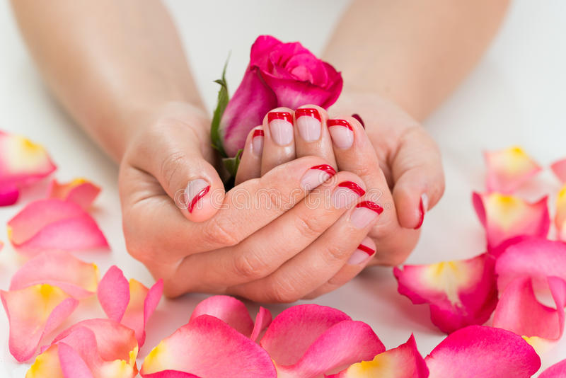 Woman Hands With Nail Varnish Holding Rose stock image