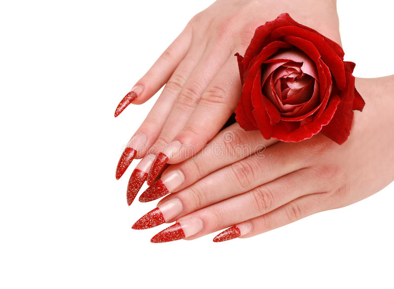Woman hands with red rose royalty free stock photos