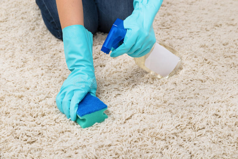 Woman Hands Rubbing Carpet. Close-up Of Woman Hands In Glove Rubbing Carpet With Sponge royalty free stock images