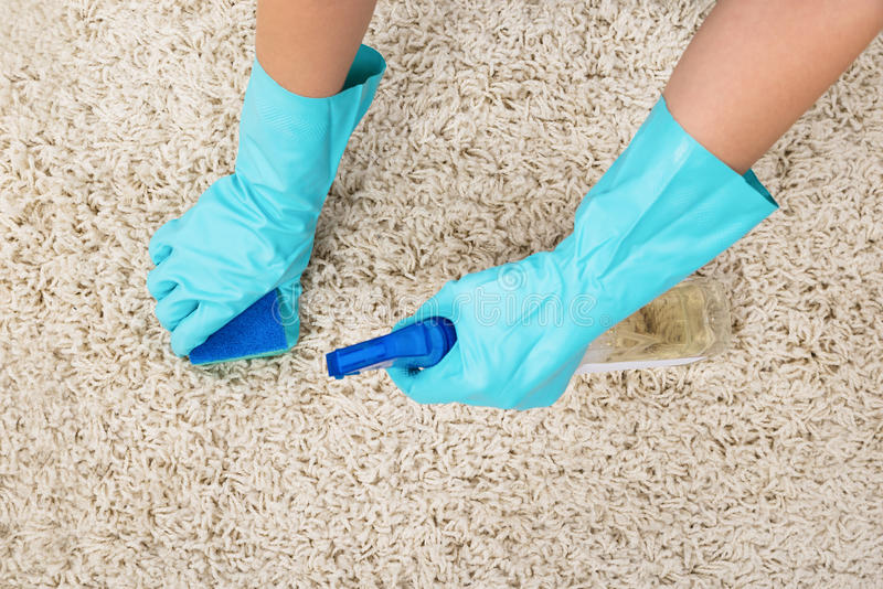 Woman Hands Rubbing Carpet. Close-up Of Woman Hands In Glove Rubbing Carpet With Sponge stock image