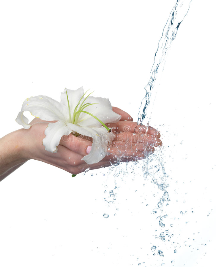Free Woman Hands With Lily And Stream Of Water. Royalty Free Stock Image - 7734526