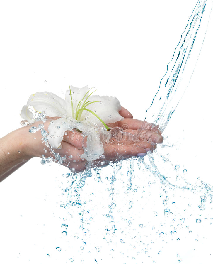 Free Woman Hands With Lily And Stream Of Water. Royalty Free Stock Images - 7734539