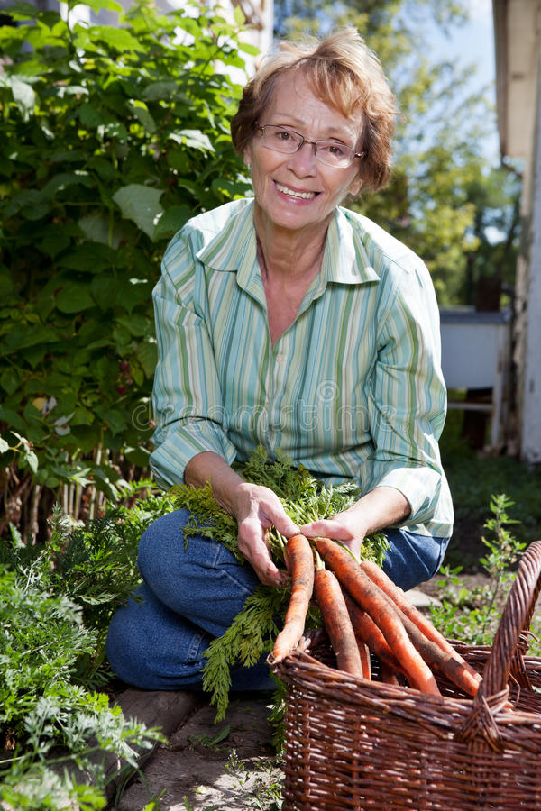 Woman harvesting carrots royalty free stock photo
