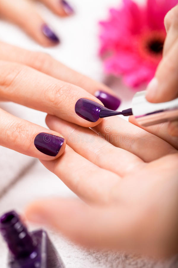 Woman having a nail manicure in a beauty salon. With a closeup view of a beautician applying rich purple nail varnish with an applicator stock photo