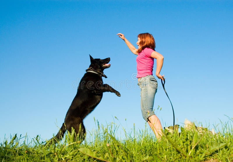 Download Woman with her dog stock photo. Image of domestic, cheerful - 19729520