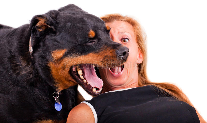 Download Woman With Her Dog stock photo. Image of blond, black - 26471928