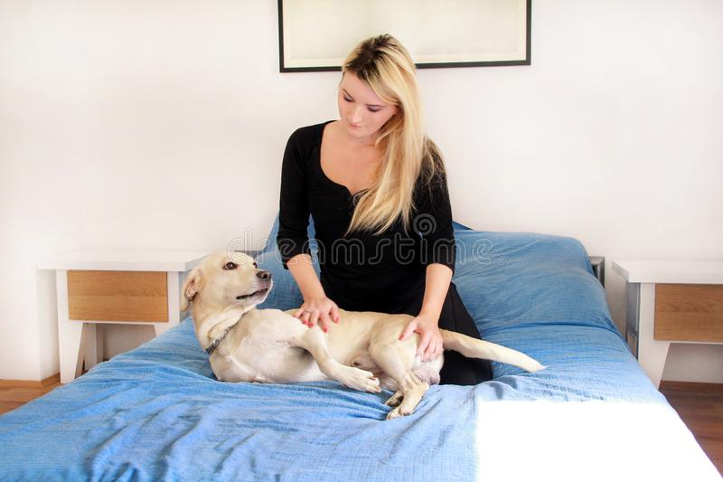 Woman with her dog in bed at home, relaxing in bedroom. Beautiful girl is playing, together and petting with dog in bed. Yellow labrador retriever climbed into stock photo