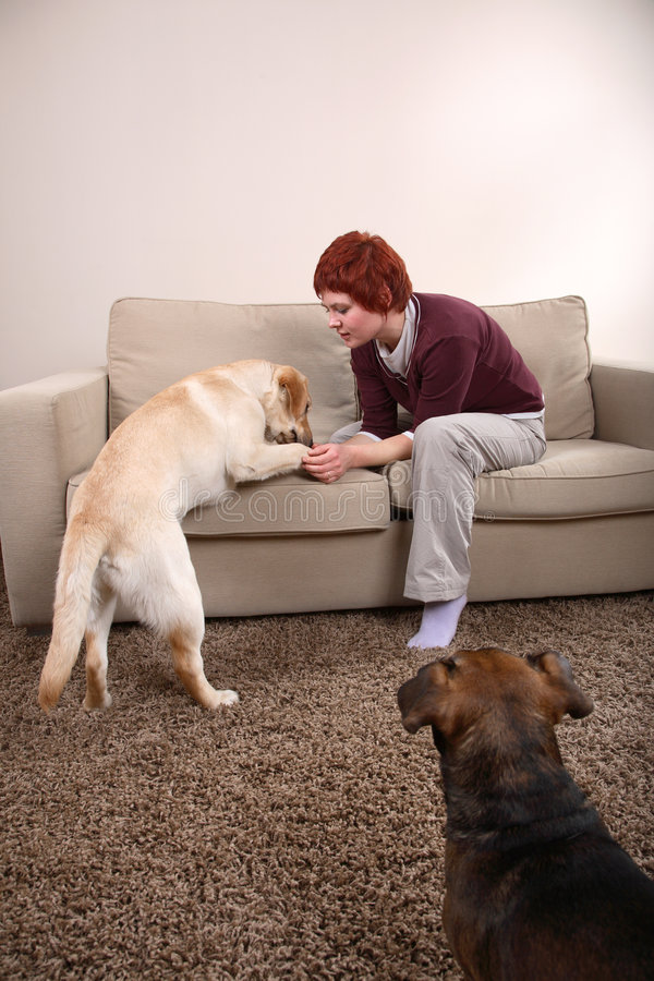 A Woman And Her Dogs royalty free stock photo