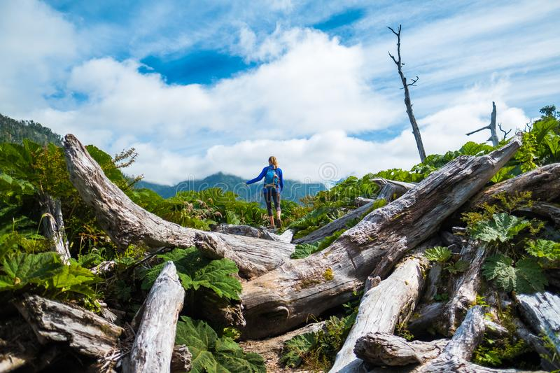 Woman hiker moves through difficult terrain. With logs. Pumalin National Park, Chile royalty free stock photo