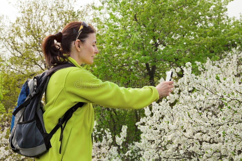 Woman Hiker Taking Photo  Of A Blossoming Tree Stock Photo