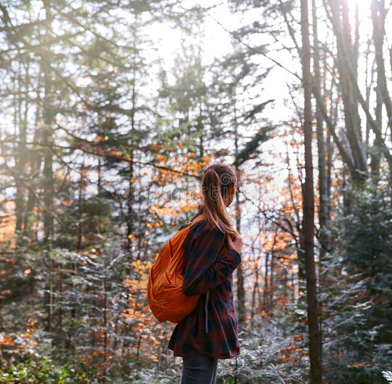 Woman hiker walking on the trail in pine woods royalty free stock image