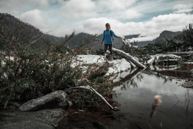 Woman hiker. Walks in the wild area with swamps and dry trees stock image