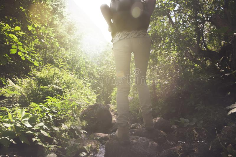 Woman hiking in Forest royalty free stock images