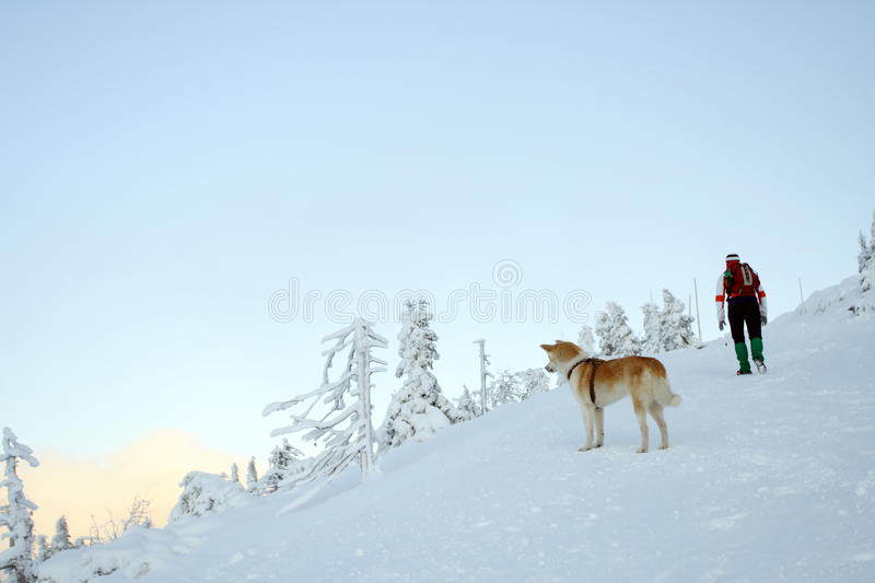 Woman hiking in mountains with akita dog.