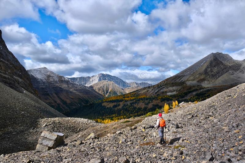 Woman hiking in mountains in Canadian Rockies among picturesque peaks and yellow autumn trees. stock photos