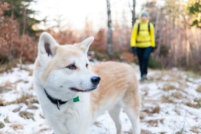 Woman hiking in winter forest with dog stock photography