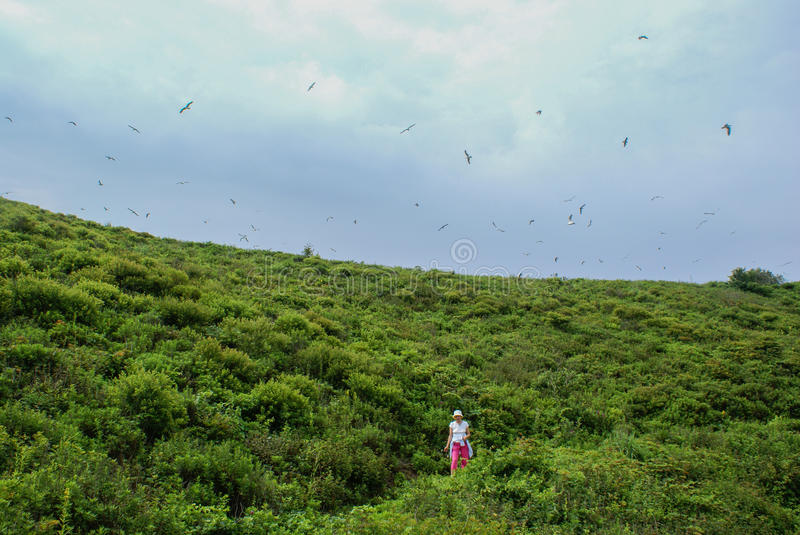 The woman is on the hill and the sea gulls fly over it. royalty free stock photography