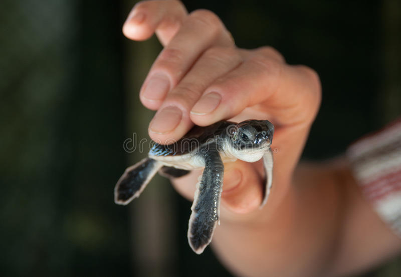 Download Turtlet stock photo. Image of photography, shell, wildlife - 30161060