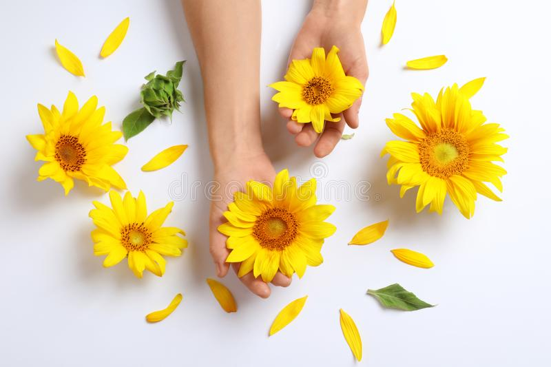 Woman holding beautiful sunflowers. On white background, top view royalty free stock photo