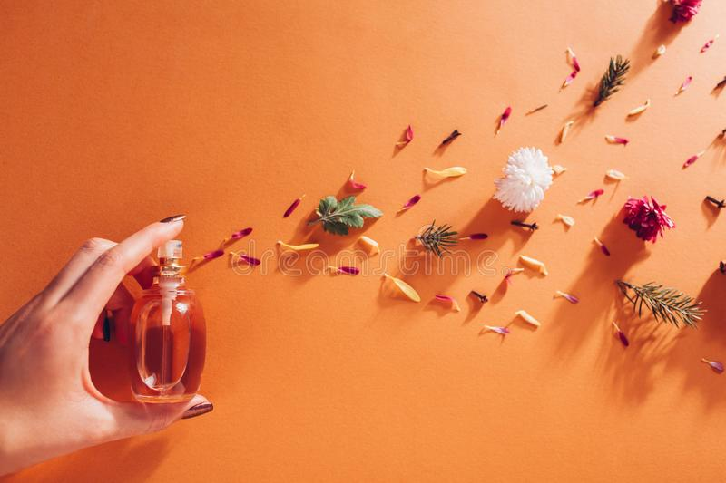 Woman holding bottle of perfume with ingredients. Fragrance of flowers, spices, herbs and fir tree on orange background. Woman holding bottle of perfume with stock photo