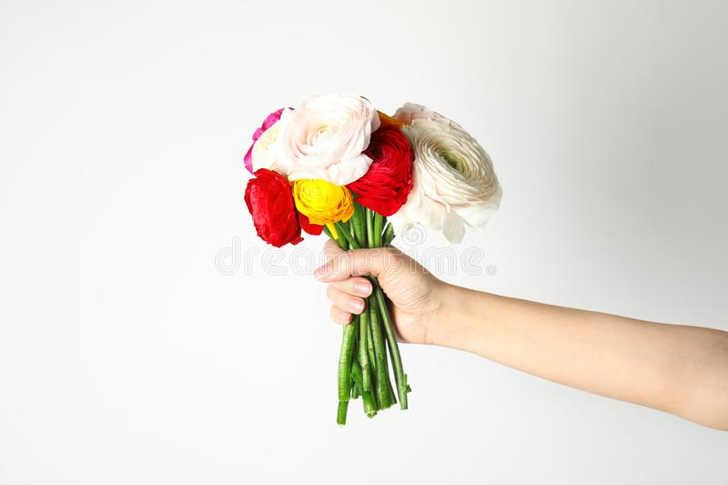 Woman holding bouquet with beautiful ranunculus flowers on background royalty free stock images