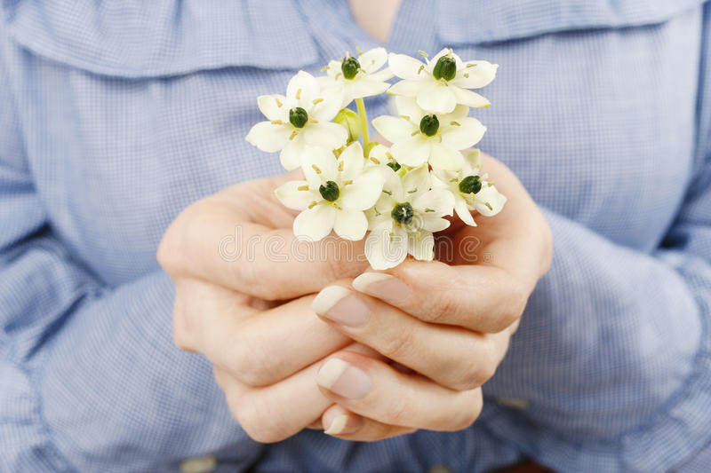 Woman holding bouquet of tiny white flowers (ornithogalum arabic. Um). Spring flowers stock photography