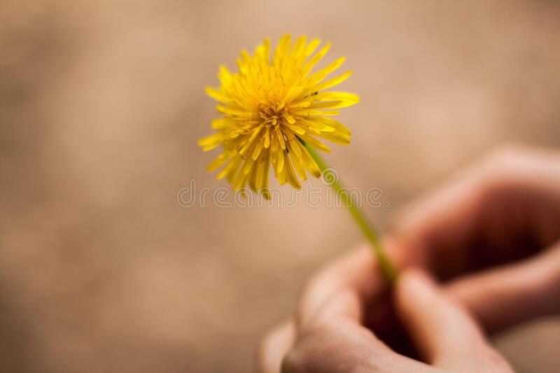 Woman Holding Flower royalty free stock photography