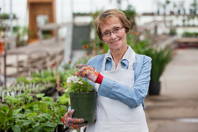 Woman holding flower pot royalty free stock photos