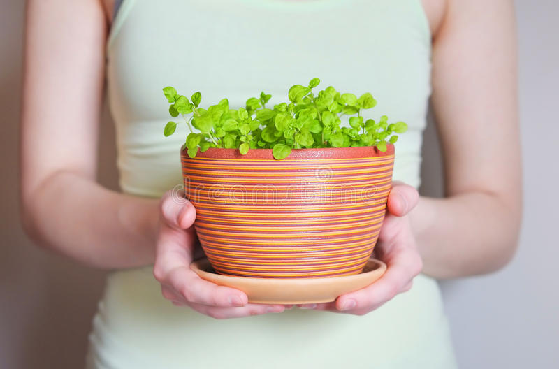 Woman holding flowerpot with sprouts royalty free stock photo