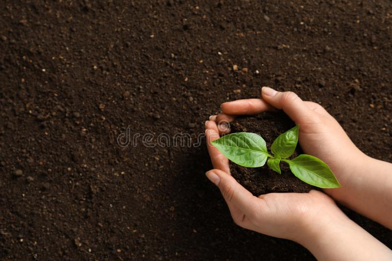 Woman holding green seedling on soil. Space for text royalty free stock photo