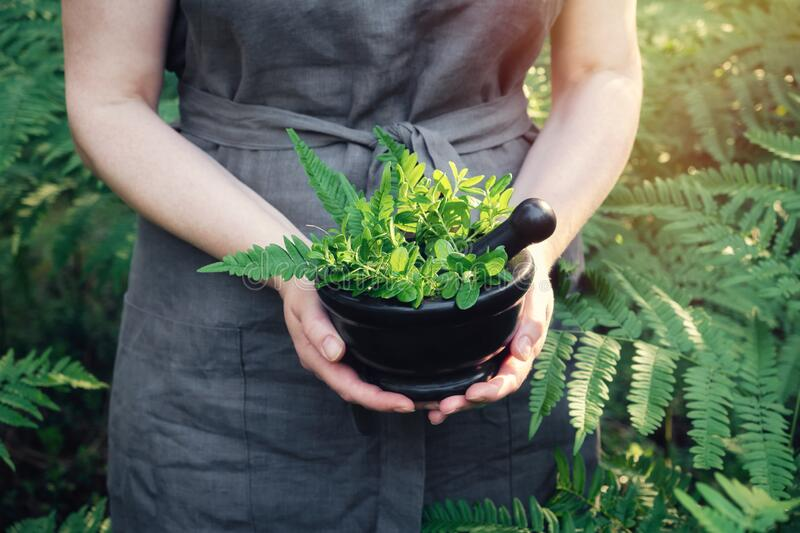 Woman holding in her hands a mortar of medicinal herbs. Herbalist woman gathering healing plants. stock photo