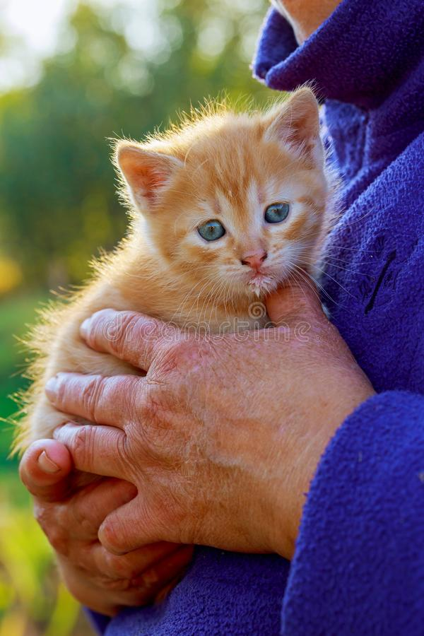 Woman holding kitten in her arms stock images