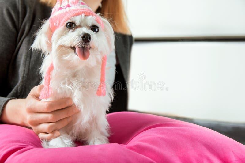 Woman holding a maltese dog stock photos
