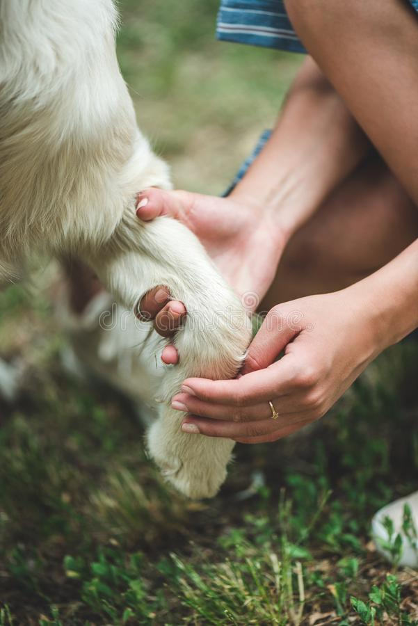 Woman holding paw of dog. Cropped shot of woman holding paw of dog stock images