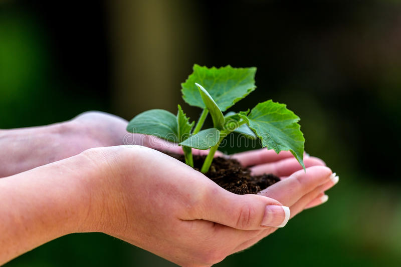 Woman holding plant in hand stock photo