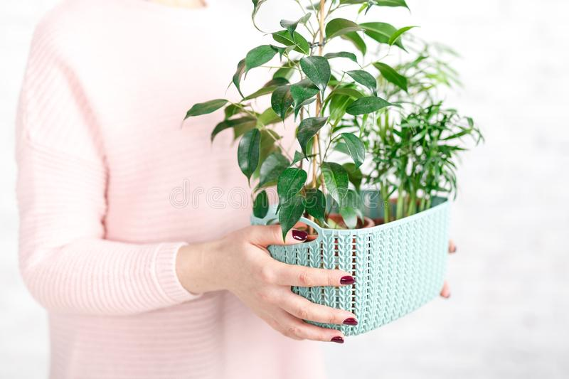 Woman holding a plastic container with a green house plant royalty free stock image