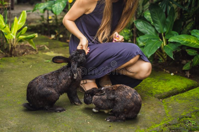 Woman holding a rabbit. Cosmetics test on rabbit animal. Cruelty free and stop animal abuse concept royalty free stock photography