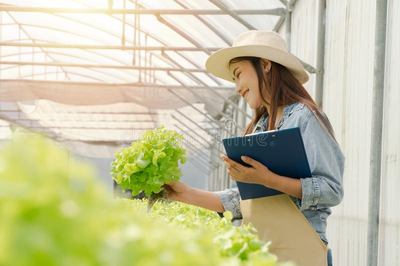 Asian farmer woman holding raw vegetable salad for check quality in hydroponic farm system in greenhouse. Concept of Organic foods royalty free stock images
