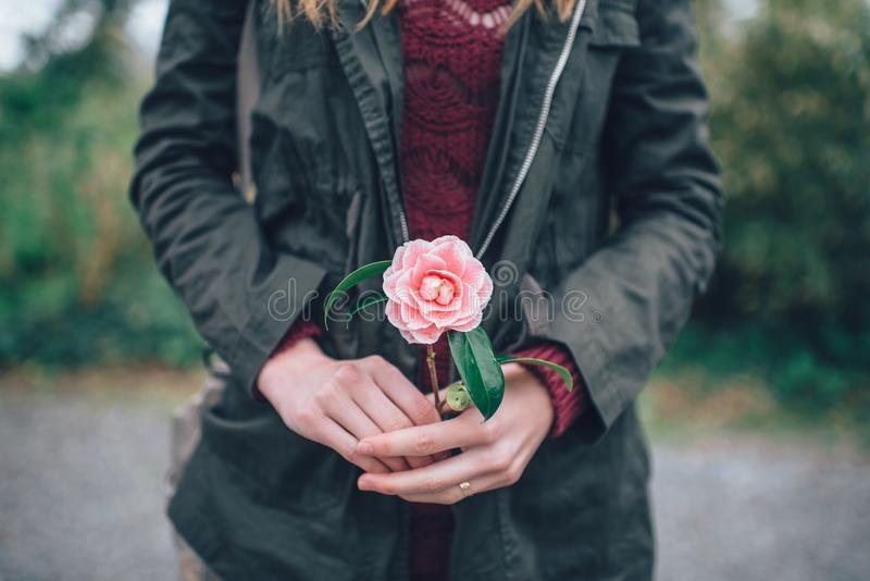 Woman Holding Red Rose Free Public Domain Cc0 Image
