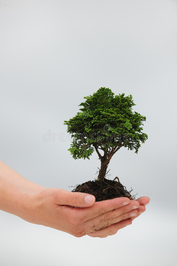 Woman holding a small tree. In her hands royalty free stock photos